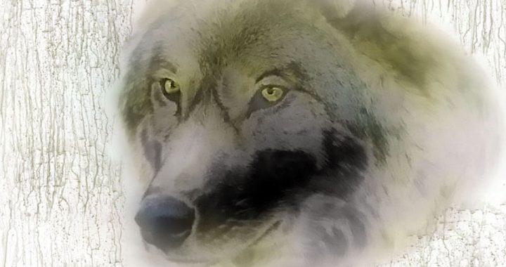 """Keeping """"the wolves"""" at bay"""